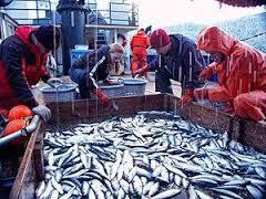 """Regione Marche:FEAMP Marche 2014/2020 – Misura 5.69 """"Trasformazione dei prodotti della pesca e dell'acquacoltura – scadenza  18 Aprile 2017"""