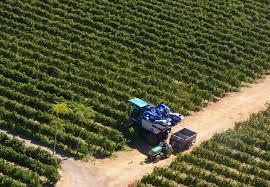 """Bando Regione Marche: """"Sostegno ad investimenti nelle aziende agricole"""". Scadenza 2 Ottobre 2018"""