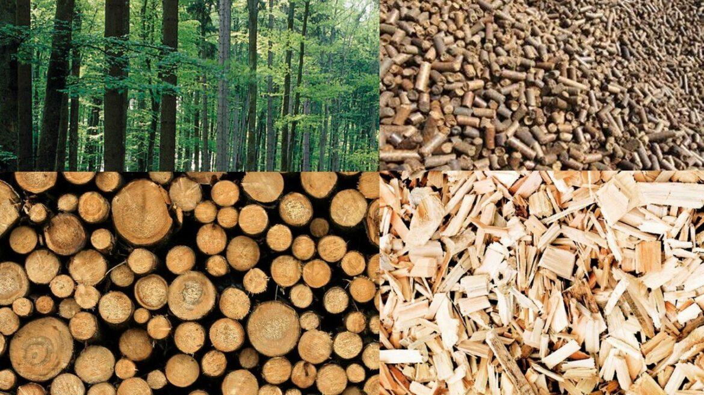 – Proroga scadenza –  PSR Marche 2014-2020: Bando Progetti Integrati Filiere per la produzione di energia da biomasse forestali – annualità 2020
