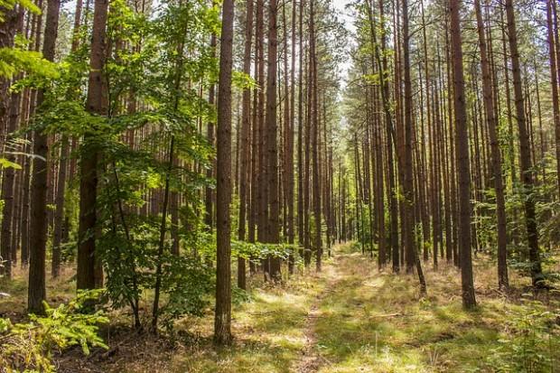Misure intese a promuovere l'utilizzo sostenibile delle superfici forestali – Misure connesse alle superfici – Campagna 2021.