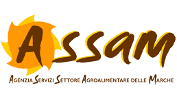 Assam Marche: concorsi per 4 funzionari, selezione per laureati